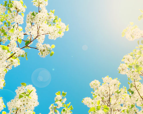 8 Reasons to Tune-up Your Home's Air Conditioner in the Spring
