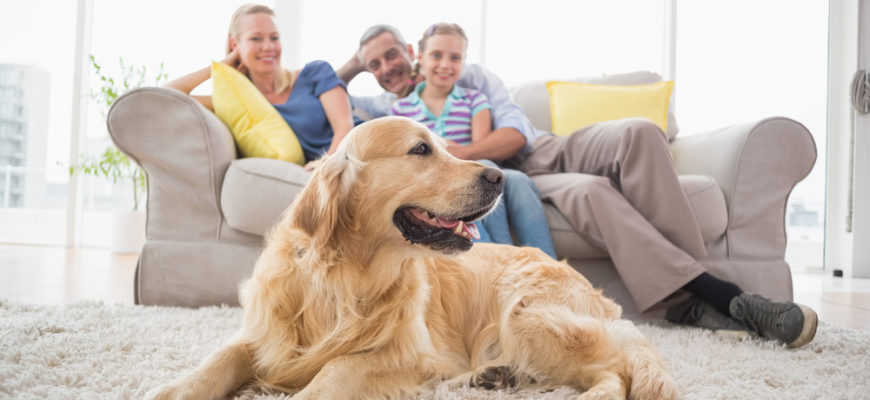 8 Top HVAC Maintenance Tips for Pet Owners